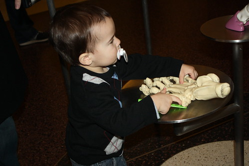 American Natural History Museum 2013