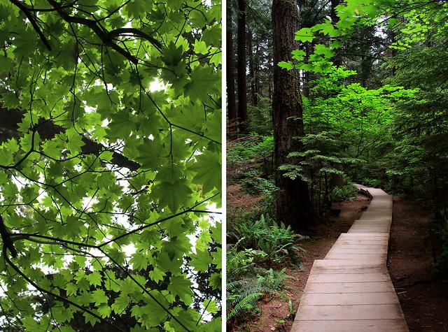 North Vancouver Lynn Canyon Walk
