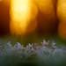 Dancing In The Sundown by lichtmaedel