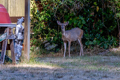 Deer waiting at home
