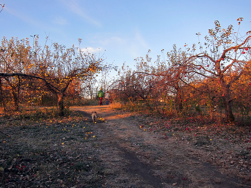 n early morning walk in the orchard