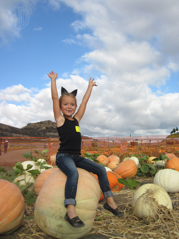 queen of the pumpkin patch