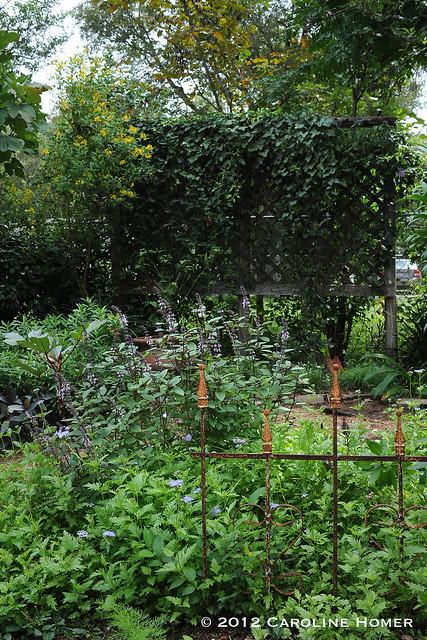 Renee Studebaker's garden