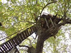 branch, leaf, tree, tree house,