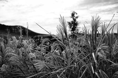 287: Landscape by pvera