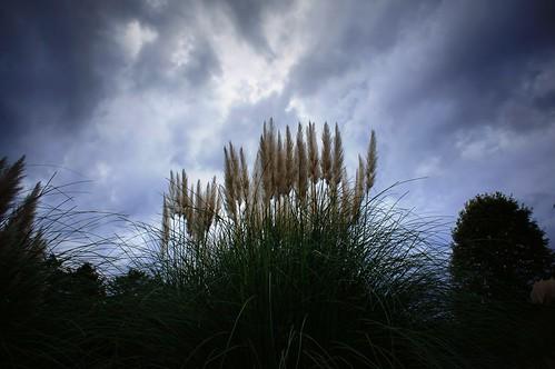 park cloud grass japan photography tokyo memorial sony era 365 雲 pampas tachikawa 立川 公園 takashi すすき showa 昭和 nex 366 記念 kitajima turntable00000