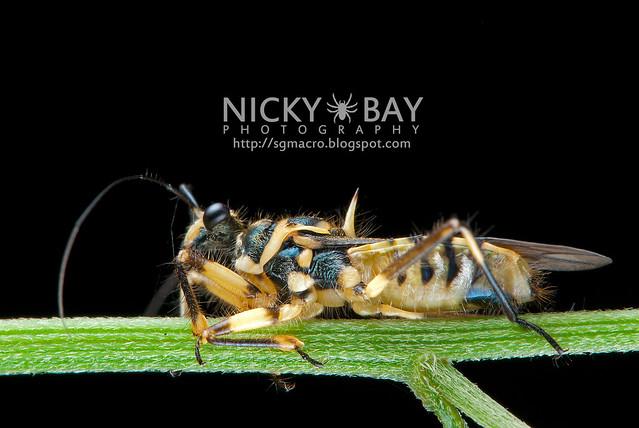 Assassin Bug (Reduviidae) - DSC_5783