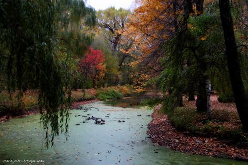 autumn trees canada fall nature colors automne landscape couleurs ducks arbres québec paysage parc orton 2012 canards faune limoilou domainedemaizerêts