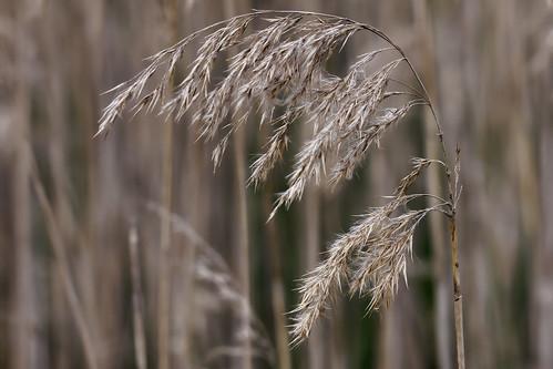 Reed 2012-10-16 (_MG_5515)