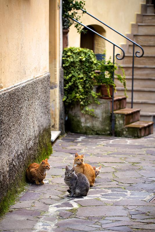Gatti a Montenero (Rieti)