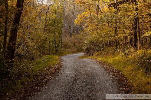 road autumn fall leaves md maryland foliage
