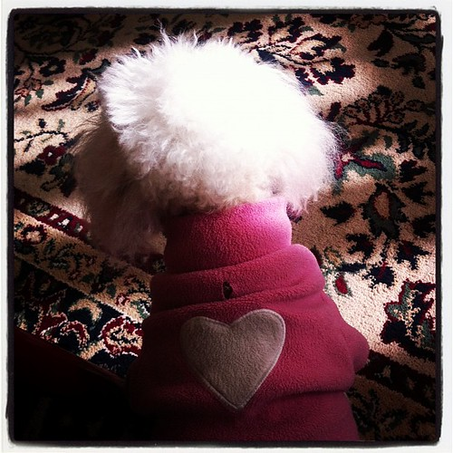 Puppy love 'hood style.