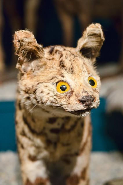 Serval - Failed Taxidermy