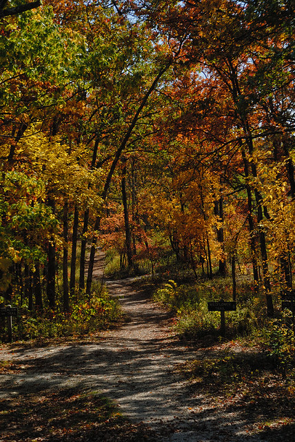 Shaw Nature Reserve (the Arboretum), in Gray Summit, Missouri, USA - forest path 2