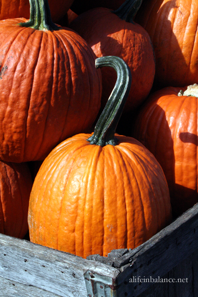 linvilla_orchards_4