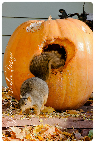 Squirrel-in-a-Pumpkin-4