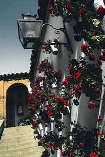 Bilde av Zoco Municipal. flowers wall stairs spain courtyard andalucia cordoba geranium córdoba esp calledelosjudíos zocomunicipal nellumazilu