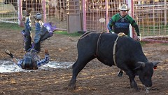 Junior Bull Riders Association
