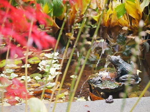 real frog watching bronze frogs