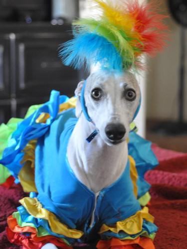 Calypso Dancer Dog