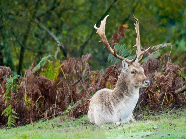 New Forest Deer by Paul Chambers,Salisbury, Wilts, UK