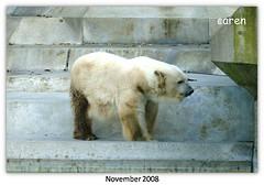 Eisbär Lisa 1977-2009