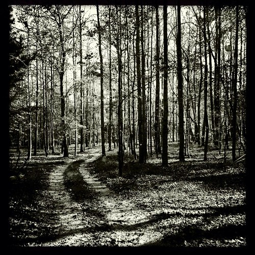 blackandwhite forest woods tn tennessee harriman johns iphone woodedroad harrimantn johnslens iphoneography hipstamatic tniphonehipstamatic claunch72monochromefilm claunch72monochrome