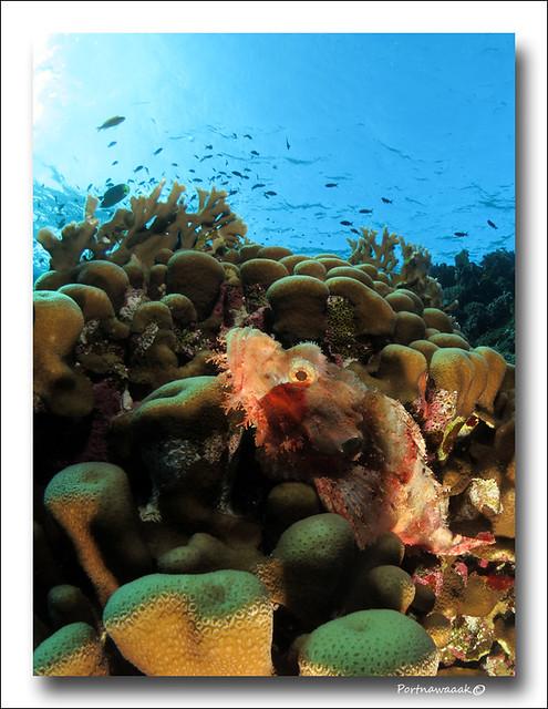 de retour de mer rouge - EGYPTE 8142672650_32b8249118_z