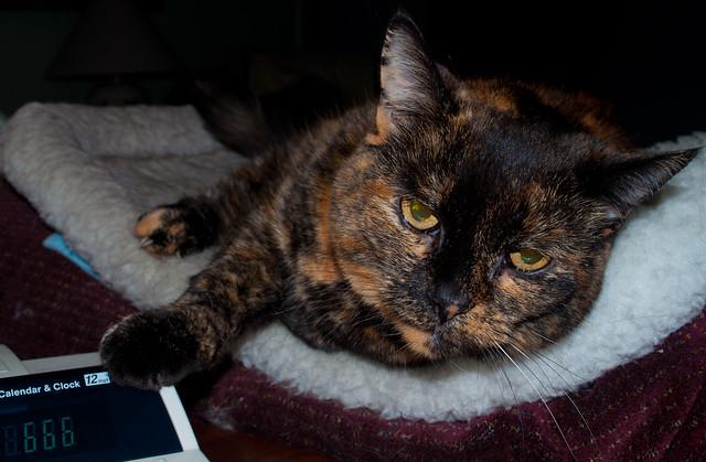 Fussy Cat Cat Litter