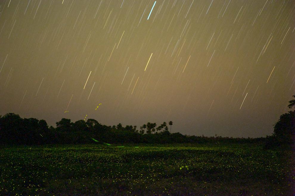 Una toma de más de 8 minutos de duración permite observar cómo las estrellas con el movimiento de la tierra crean líneas en el cielo, denominado Startrail, mientras que sobre los camalotes cientos de luciernagas sobrevuelan el río. (Tetsu Espósito)