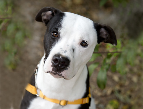 Multnomah County Animal Services Dog of the Week