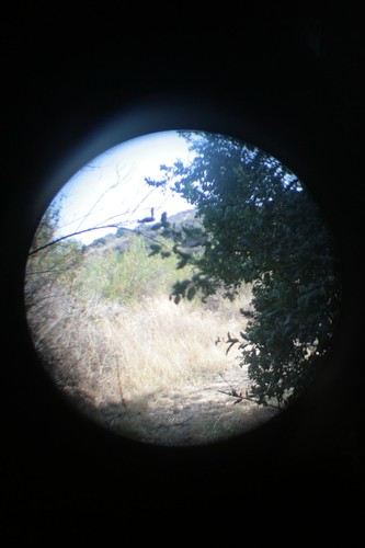 as seen through binoculars