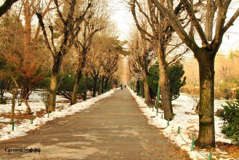 Bucuresti_Parcul Cismigiu_6