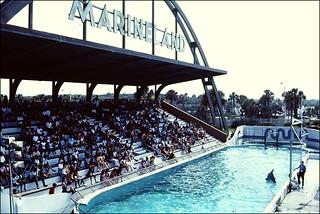 Marineland - Dolphin Show