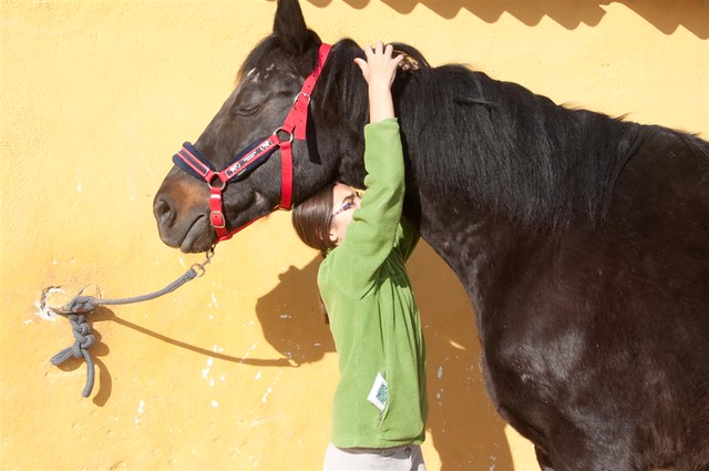 horse and blacksmith
