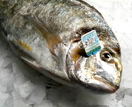 isla sur fish