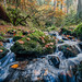 Silberbachtal # 15 - Bach, Herbstlaub und bemooste Felsen - Creek, autumn foliage, and mossy rocks