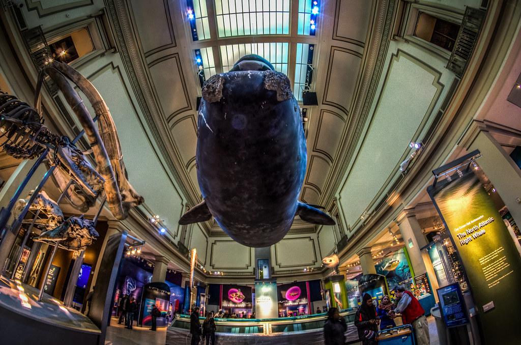 National Museum of Natural History - Ocean - HDR (handheld)