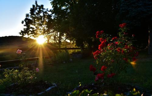 coucherdesoleil atardecer sunset rosiers soir evening glay soleil raies rayons août2016 jardin barrières