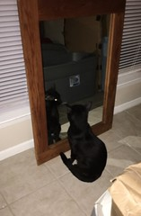Pets Animal Themes Indoors  One Animal Domestic Animals Cat Domestic Cat Black Color Feline Point Of View Luvsuncat Double & Double Shadows & Lights CreaturesOfTheDay Cat Lovers Catsofinstagram Mirror Reflection Reflections Reflection_collection Looking T
