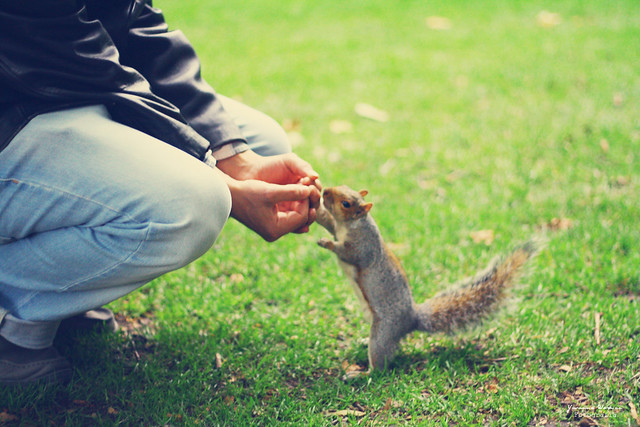 Marks & the friendly squirrel
