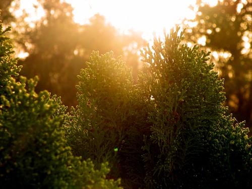 green sunrise bush forrest