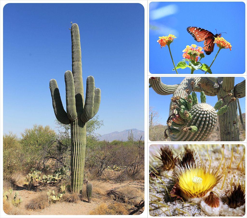 Desert Museum Tucson