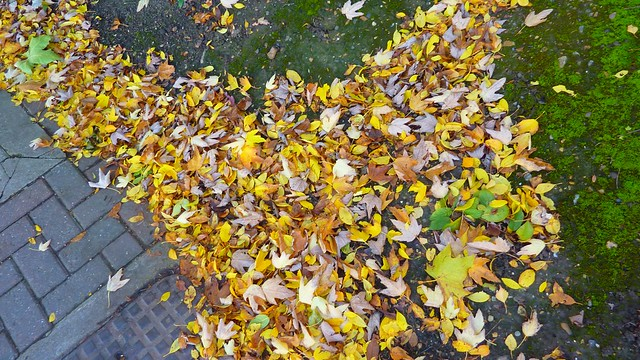Fall in London, 2012 looking down 2