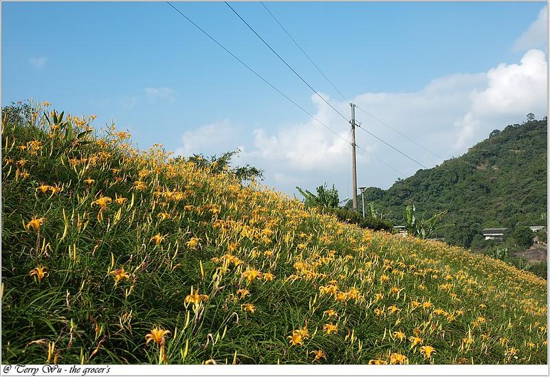 2012-10-14 木柵金針花 a (10)