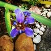 Orquídea linda que nasceu no jardim de casa  :)