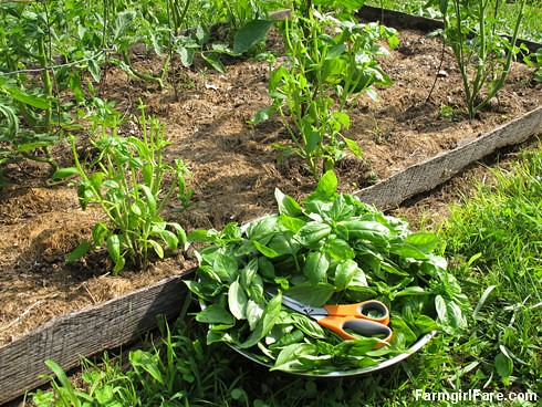 Go Green To Save Money - Growing Your Own Fresh Herbs (4) -  FarmgirlFare.com