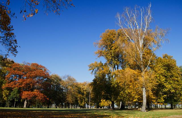 Park w Chotowie