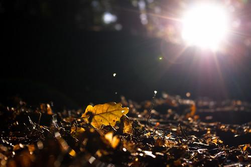 Autumn Mornings // 20 10 12