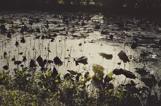 14-lake1